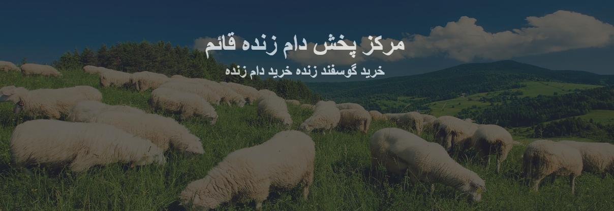 گوسفند زنده | دام زنده | خرید گوسفند زنده در تهران | کمترین قیمت بازار